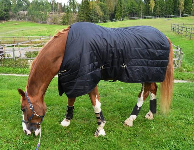 back on track täcke häst
