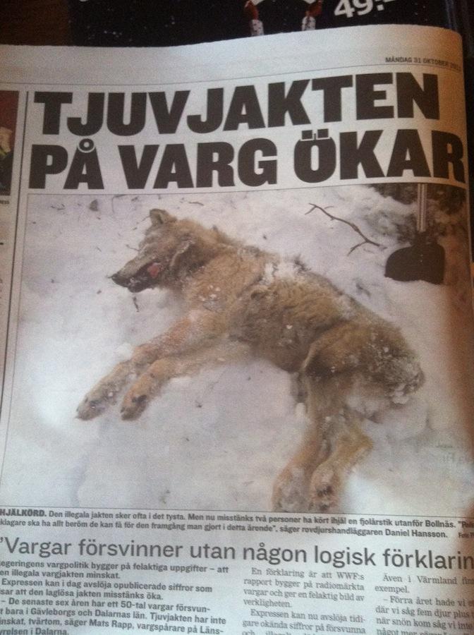 Skramde bort vargar och sina hundar