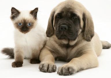 allergitester för katt och hund
