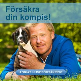Försäkra din hund med Agria Djurförsäkring