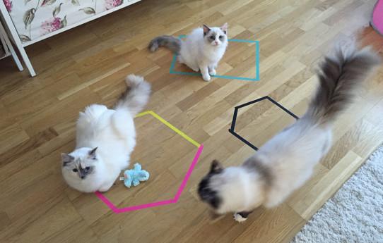 Hur man fångar en katt