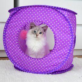 Katt tält lila med prickar - Furever Catlady