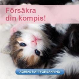 Försäkra din katt med Agria Djurförsäkring